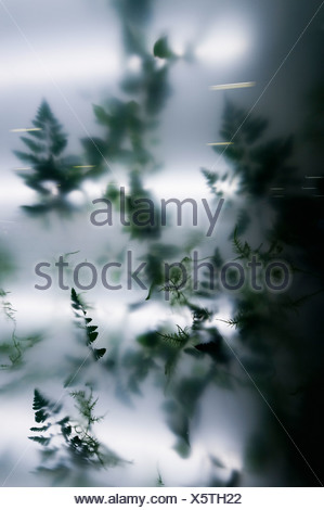 Indoor plant behind acrylic glass - Stock Photo