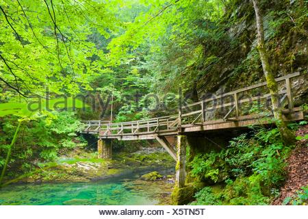 Wooden footbridge in Kamacnik canyon near Vrbovsko in Croatia - Stock Photo