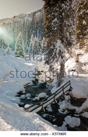 Snow-covered forest and a bridge, Austria, Europe - Stock Photo