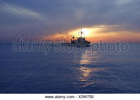 professional fishing boat seagull on sunset sunrise - Stock Photo
