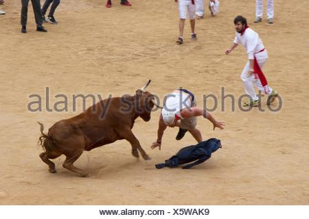 wild cows in the bullring of Pamplona in San Fermin 2016 - Stock Photo
