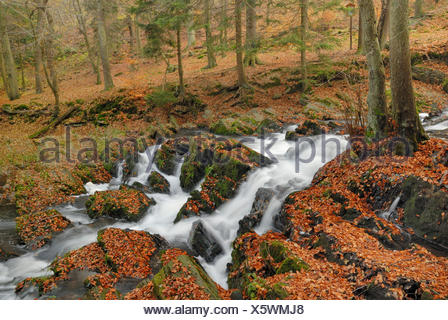 Autumn at Selke Waterfall in the Harz Mountains, Saxony-Anhalt - Stock Photo