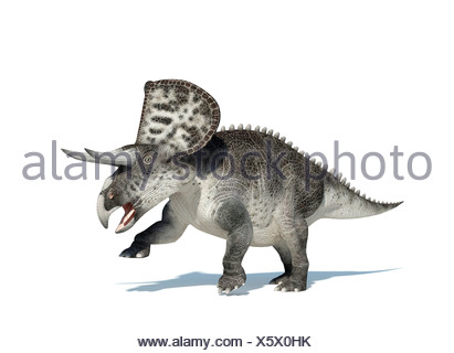 Zuniceratops dinosaur lived approximately 90 million years ago during the Turonian age of the Late Cretaceous period - Stock Photo