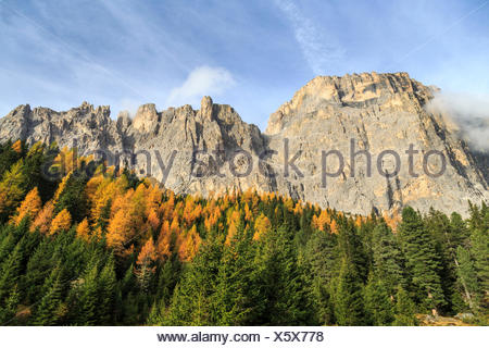 Colorful woods in autumn at Sella Pass. Dolomites Fassa Valley Trentino Alto Adige Italy Europe - Stock Photo