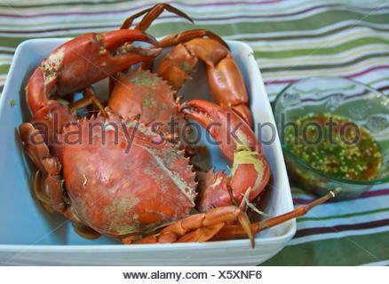 Steamed Crabs - Stock Photo