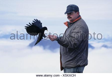 Man and Alpine Chough / Mann und Alpendohle - Stock Photo