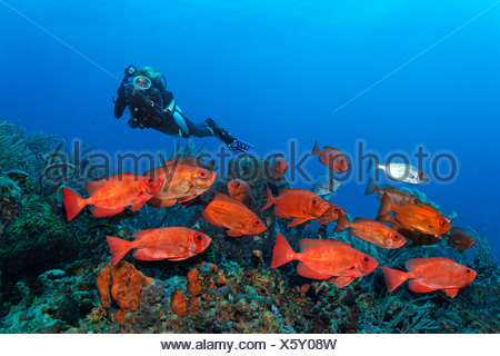 Scub diver with an underwater camera, underwater photographer, shoal of Red Bigeye (Priacanthus hamrur) swimming over a coral - Stock Photo