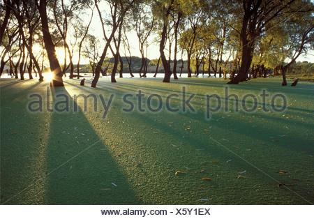 Reservoir dam covered with algae, Sierra Fria, Aguascalientes, Mexico - Stock Photo