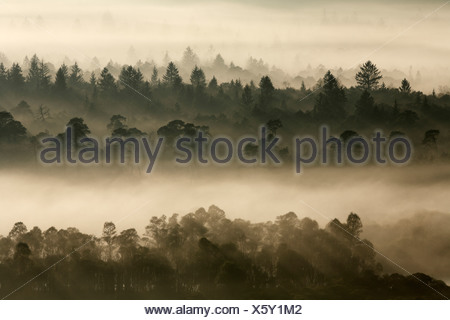 Germany, Bavaria, Upper Bavaria, View of pupplinger au near wolfratshausen in morning - Stock Photo