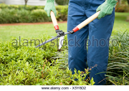 cropped image of person gardening with shears - Stock Photo