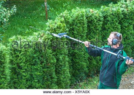 Hedges cutting - Stock Photo