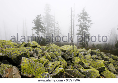 Lusen mountain, summit, 1373 m, Bavarian Forest National Park, Lower Bavaria, Germany, Europe - Stock Photo