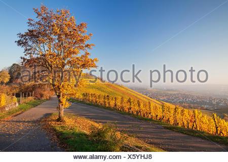 Blick über Stuttgart bei der Grabkapelle bei Stuttgart-Rotenberg , Weinberge bei Sonnenuntergang im Herbst, Baden Württemberg, Deutschland - Stock Photo