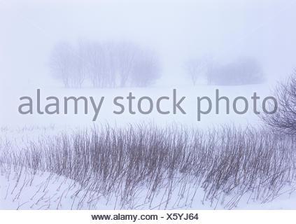 Belgium, High Fens, Hautes Fagnes, High Fens-Eifel Nature Park, winter, - Stock Photo