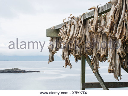 Dried fish hanging on rack by sea - Stock Photo