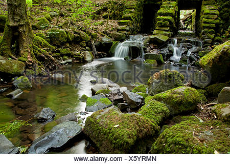 small stream in the forest, Germany, Bavaria, Rhoen - Stock Photo
