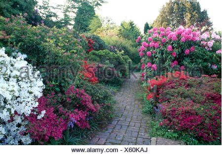 Paved path through borders with pink and white azaleas and rhododendrons in a large country garden in Spring - Stock Photo