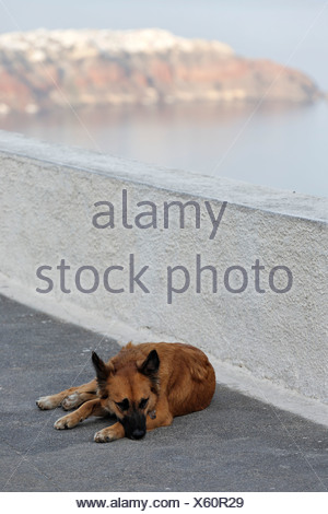 Dog on a terrace, Imerovigli, Santorini, Greece - Stock Photo