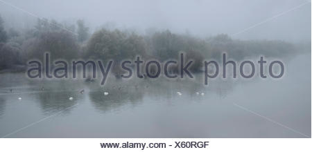 Sauer Delta in Autumn - Alsace France tributary of the Rhine - Stock Photo