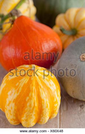 Pumpkins & Squashes - Stock Photo