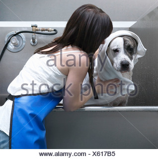 Woman toweling-off dog - Stock Photo