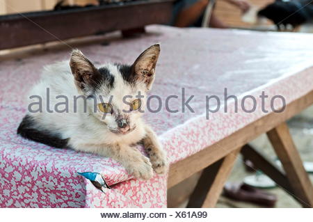Little sick cat on a table - Stock Photo