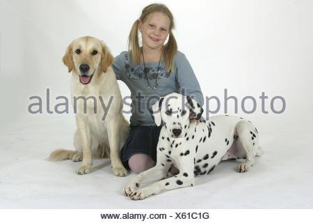 Dalmatian / Golden Retriever / Dalmatiner - Stock Photo