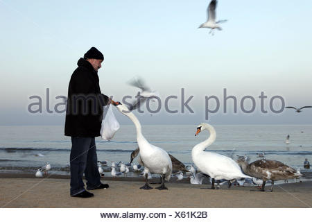 Man, at the side, birds, feed, sea, - Stock Photo