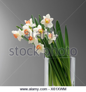 White daffodils in glass vase, close up - Stock Photo