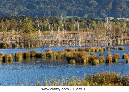 Nicklheimer Moor, peat bogs between Raubling and Bad Feilnbach, Upper Bavaria, Bavaria, Germany, Europe, PublicGround - Stock Photo