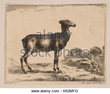 Plate 15: doe, from 'Various animals' (Diversi animali). Series/Portfolio: 'Various animals' (Diversi animali); Printmaker: Anonymous, 17th century; - Stock Photo