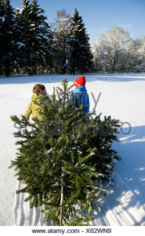 Children pulling Christmas tree in snow - Stock Photo