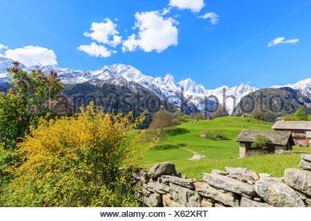 Huts in the green valley framed by snowy peaks Soglio Maloja canton of Graubunden Engadin Bregaglia Valley Switzerland Europe - Stock Photo