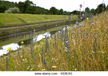 wild flower meadow at the Emscher, Germany, North Rhine-Westphalia, Ruhr Area, Essen - Stock Photo