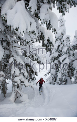 Woman skier skins up Tincan Ridge while backcountry skiing in Turnagain Pass, Southcentral Alaska, Winter - Stock Photo