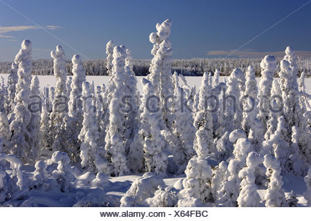 North America, Canada, Yukon territory, winter scenery, - Stock Photo