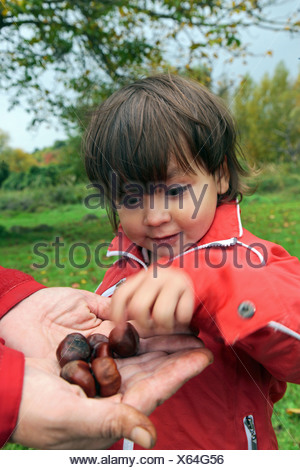 Child gathering chestnuts, Niederwerth, Rhineland-Palatinate, Germany, Europe - Stock Photo