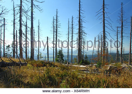 Dying forests in the Bavarian Forest - Stock Photo