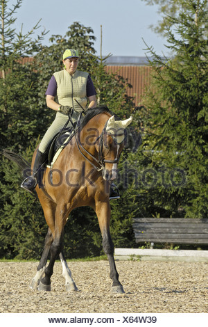 female dressage rider on a Bavarian breed horse - Stock Photo