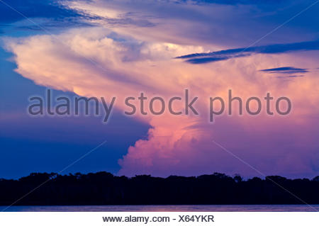 A flaming pink thunderhead storm forms over a tropical rainforest canopy after sunset. - Stock Photo