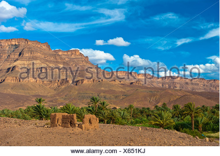 Decaying mud brick house in front of a palm grove with date palms (Phoenix) in front of the Djebel Kissane table mountain - Stock Photo