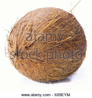 Small coconut isolated on white - Stock Photo
