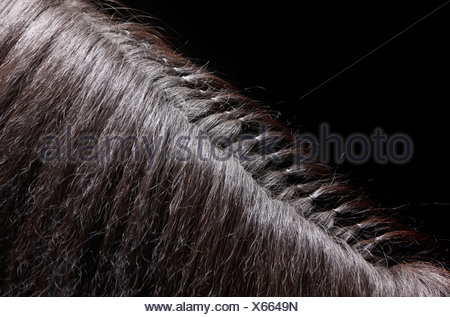 Braided Hair on Mane of  Pure Breed Icelandic Stallion, Iceland - Stock Photo