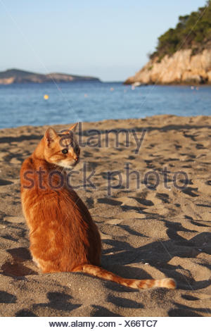 domestic cat at the beach - Stock Photo