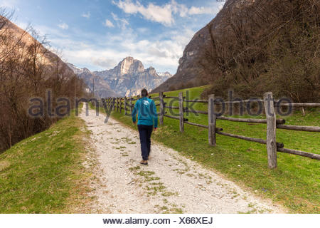 Europe, Italy, Veneto, Belluno, Sedico. A man is walking on the road leading to the center of Selection Equestrian of Case Salet, Dolomites - Stock Photo
