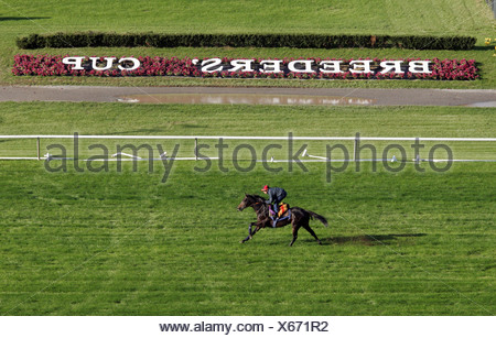Jockey on his horse at the Breeders Cup in New York, USA - Stock Photo