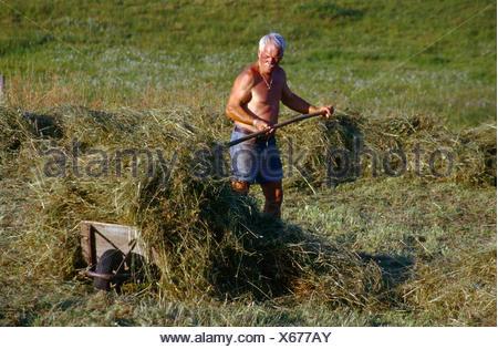 Herdsman harvesting hay on the shieling Ebenforst, Kalkalpen National Park, Upper Austria, Europe - Stock Photo