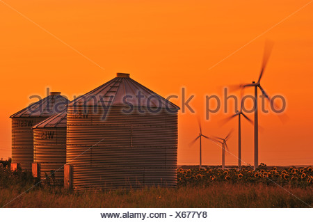 Three grain bins stand on the edge of a sunflower field at sunset with four wind turbines in the background / Manitoba, Canada. - Stock Photo