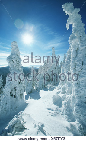 Beautiful winter scene - Stock Photo