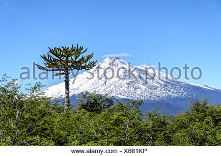 Chile, Araucania region, Conguillo national park, Llaima volcano - Stock Photo